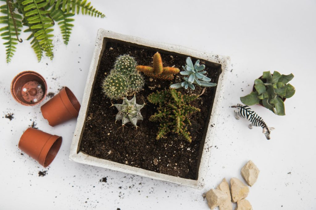 how to keep indoor cacti and succulents alive