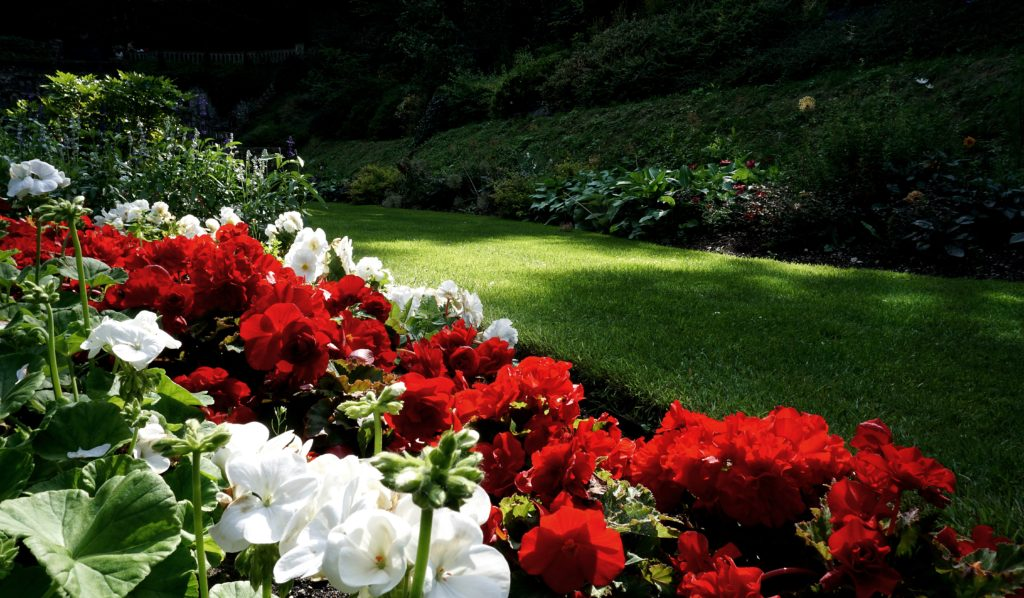 4 Steps to Improve Your Flower Garden