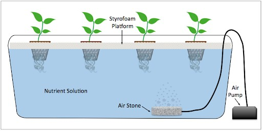 How to Build Your Own Hydroponic System