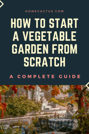 How to start a vegetable garden from scratch