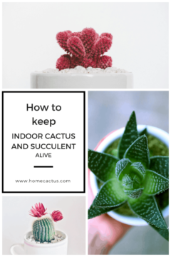How to keep cactus alive